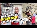 Sekolah Burung  Belajar Kacer Bareng Bidadari Cantik  Mp3 - Mp4 Download