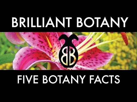 Five Botany Facts!