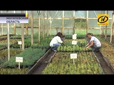 Новые технологии в лесном хозяйстве используют в Беларуси
