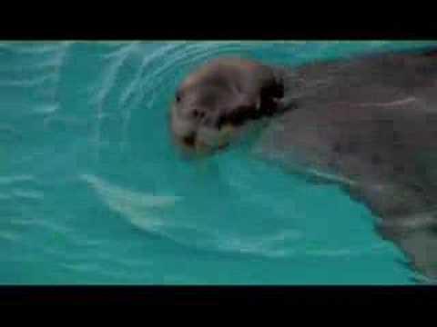 Ice Island - Trailer