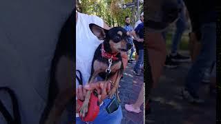 Протесты в Беларуси 2020.  Собака протестует против Лукашенко. 16.08.20 г #Лукашенко #Белорусь