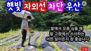 자외선 차단 농사 우산
