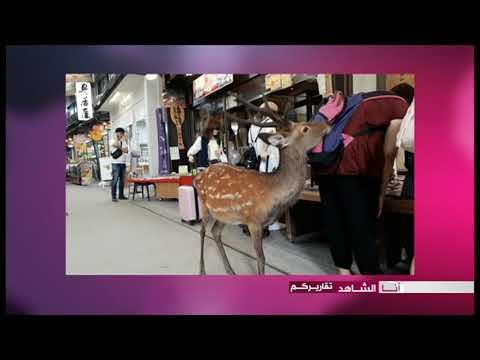 أنا الشاهد: جزيرة مياجيما السياحية في اليابان  - نشر قبل 3 ساعة