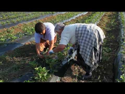 Rebuilding through Microfinance: Bosnia & Herzegovina