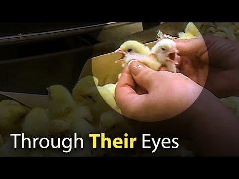 Through their eyes