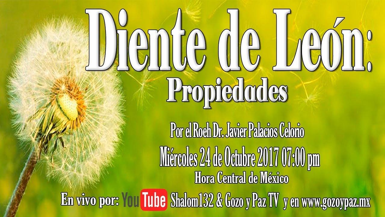 Diente De León Propiedades Por El Roeh Dr Javier Palacios Celorio