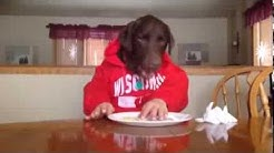 Dog Eating Food Like a Human in Red Hoodie, So Funny! Fudge Original HIGH