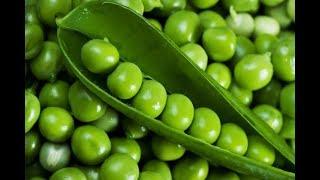Кому нельзя консервированный зеленый горошек