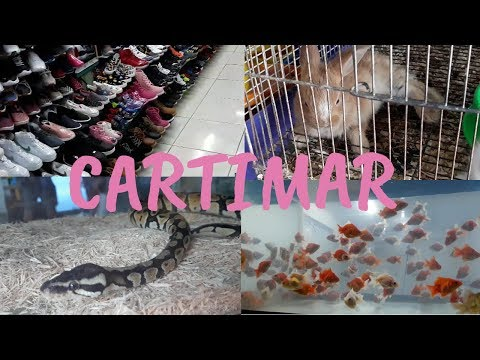 QUICK TOUR IN CARTIMAR   Bilihan ng pets, shoes, clothes and more!   Ice Detoizkie