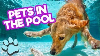 Ultimate Cute and Funniest Pets in the Pool | Funny Animals Compilation| #thatpetlife