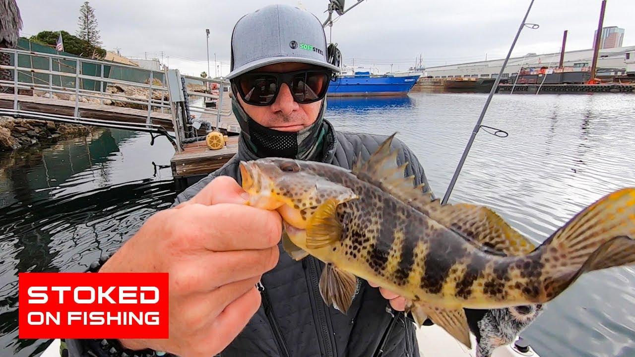 Memancing Bass Teluk SoCal tempatan | 2020 |