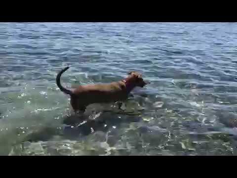 Beach Dog Paradise - Dog Swimming