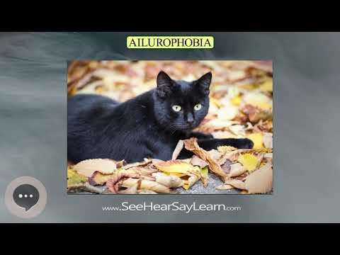ailurophobia- -phobias,-fears,-and-anxieties-😲😱🤪