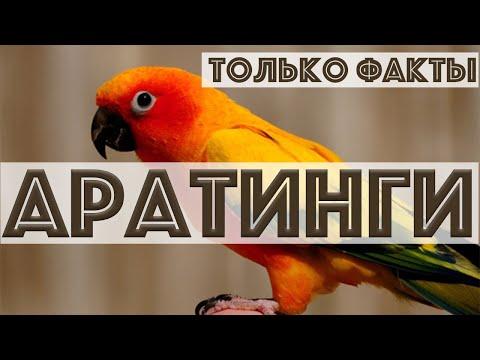 ВСЕ о АРАТИНГАХ! Самый красивый попугай солнечный аратинга, черноголовый аратинга, белоглазый ара 🦜