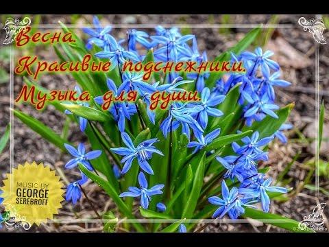 Весна Красивые подснежники Музыка для души