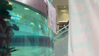 В ТЦ «Авиапарк» протёк аквариум