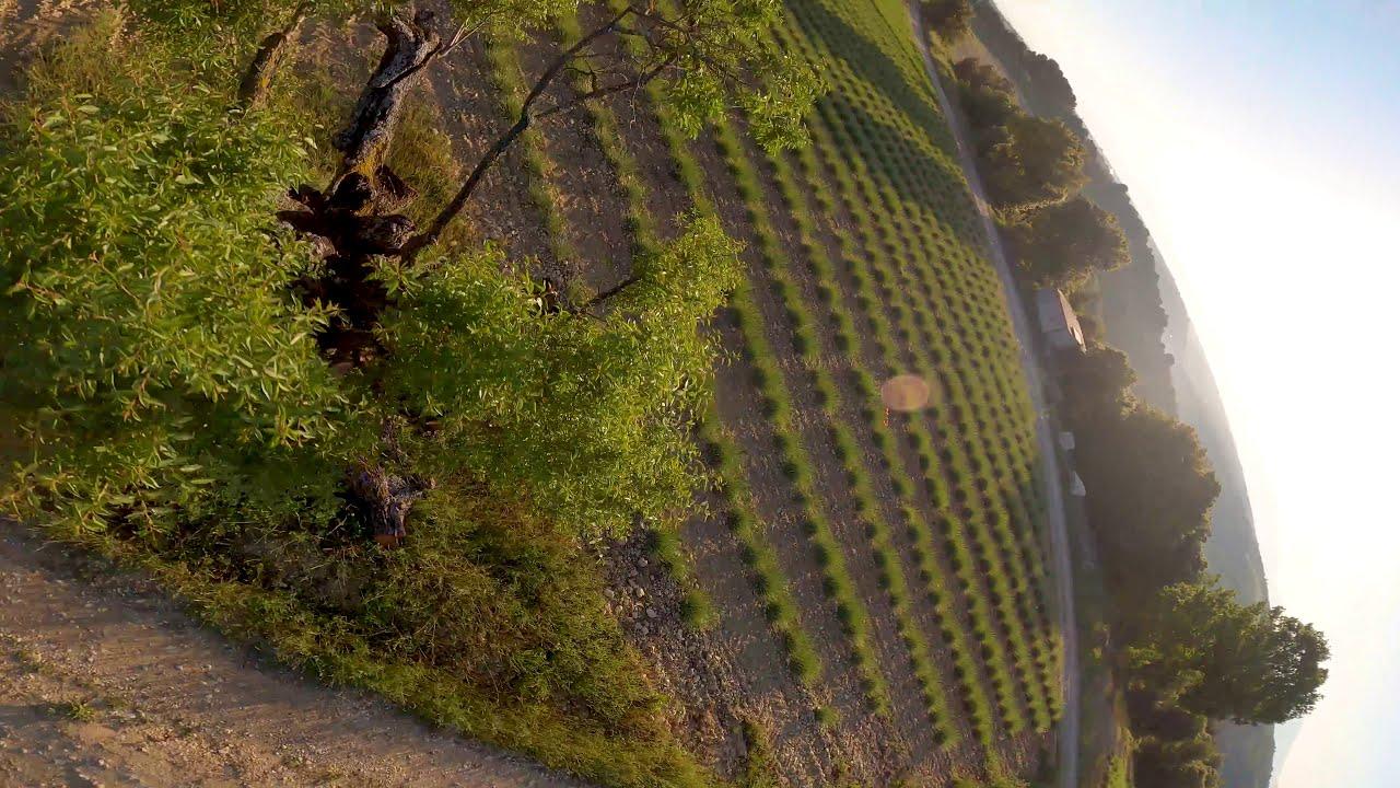 Cinematic FPV - Plateau de Valensole 4K картинки
