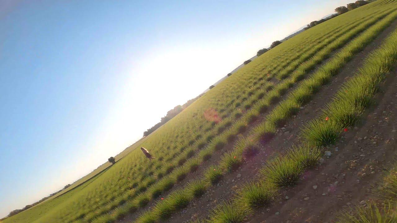 Cinematic FPV - Plateau de Valensole 4K фото