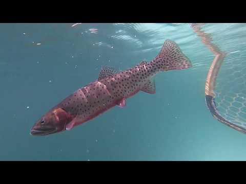 Indian Peaks Wilderness Greenback Cutthroat Trout (Part 3: Sky's The Limit Fishing At 12,000')1080p