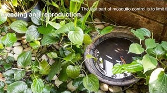 Mosquito Control in The Tampa Bay area