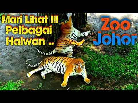 JOM!!! Lihat Haiwan Di Zoo Johor Part II