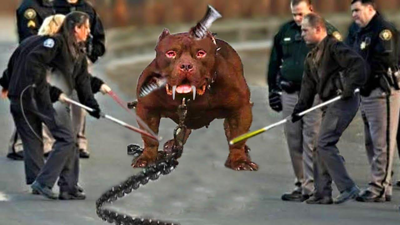 अमेरिका के इस डोग ने पूरे अमेरिका को हिला कर रख दिया   New Dog Gadgets & Inventions   Dog Technology