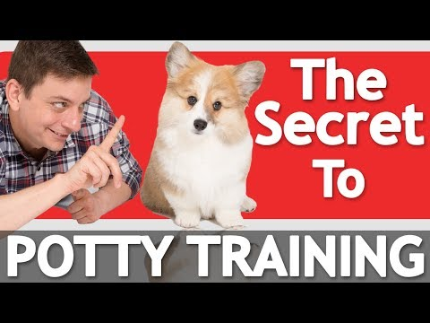 The Secret to Potty Training your Puppy! *NEW*