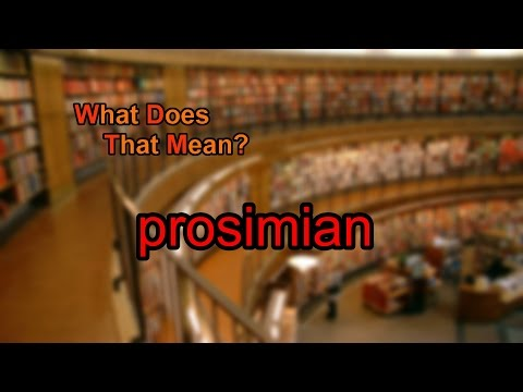 What does prosimian mean?