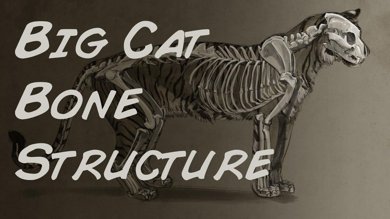 Photoshop Illustration Big Cat Bone Structure Time Lapse - YouTube