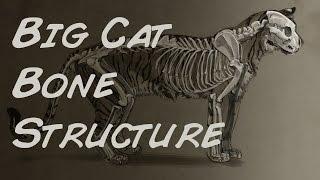 Photoshop Illustration Big Cat Bone Structure Time Lapse
