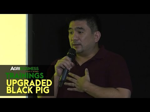 Upgraded Black Pig: Learn proper breeding and farm management | Agribusiness How It Works Trainings