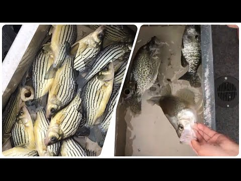 Yellow Bass & Slab Crappies!! - Iowa Fishing