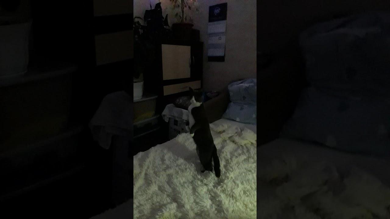 Моя кошка  как сурекат