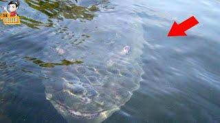 8-สัตว์ประหลาด-ใต้ท้องทะเล-ที่น่ากลัวที่สุดในโลก-ไม่น่าเชื่อ-ว่าเคยมีอยู่จริง