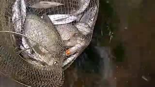видео Ночная ловля головля - найти голавля сложно, но можно