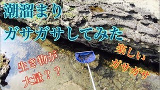 【ガサガサ】潮溜まりでガサガサしてみた ~生き物大量編~