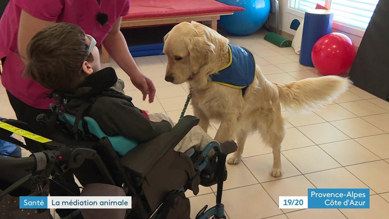 Hautes-Alpes : un chien pour accompagner les polyhandicapés à Gap - YouTube