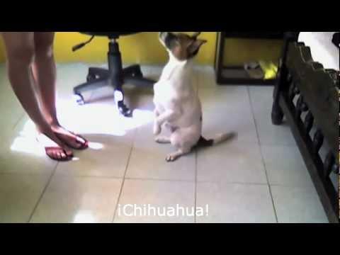 Compilation Perros que hablan