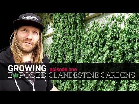 Growing Exposed Episode 1 - Clandestine Gardens