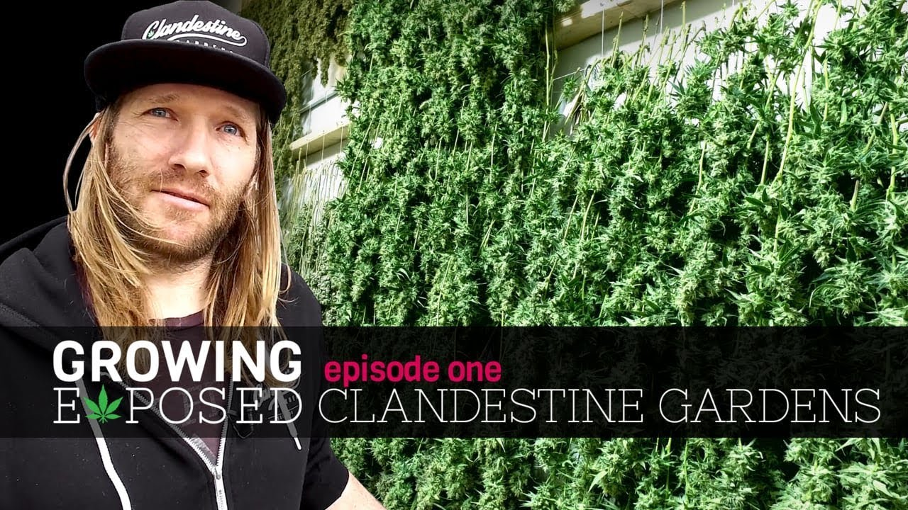 Growing Exposed Episode 1 - Clandestine Gardens