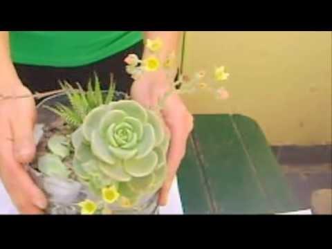 Cactus y Suculentas - Echeveria Elegant Potosina - Cactulocura - Youtube