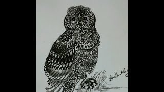 How to draw fantastic owl with charcoal pencil tutorial