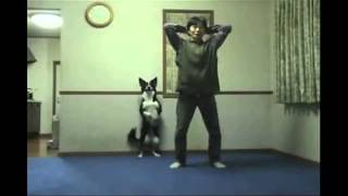 Funny Animals Working Out