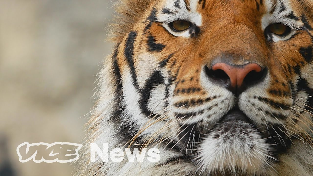 Scientists Are Worried About Wild Animals That Could Get Coronavirus From Humans