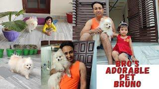 Cute Pomeranian Dog | Myra's new friend | Bruno playing with ball | Bro's pet | Toy pom |