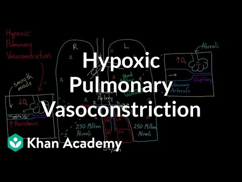 Hypoxic pulmonary vasoconstriction | Circulatory system physiology | NCLEX-RN | Khan Academy