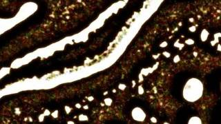 Juliet - Avalon (Jacques Lu Cont Versus Remix)