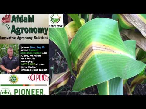 Pioneer® Growing Point® Agronomy:  Evaluating Nitrogen Sufficiency in Corn
