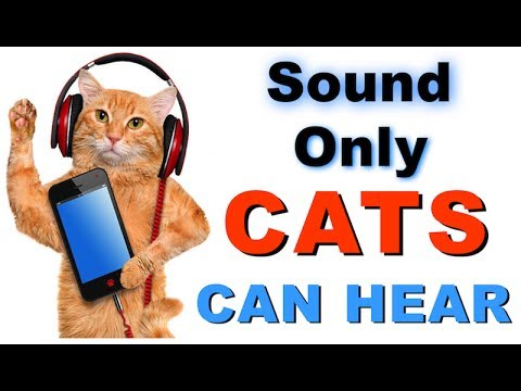 Sound Cats Can Only Hear   HQ