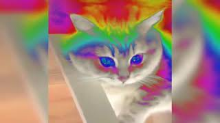 funny cats,, dogs, amazing clips,https://youtu.be/SJ3762FKcCI